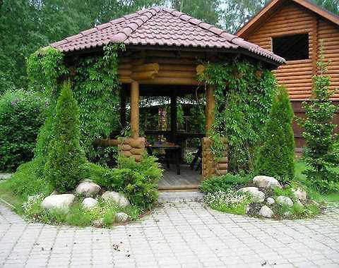 Что лучше посадить на газон